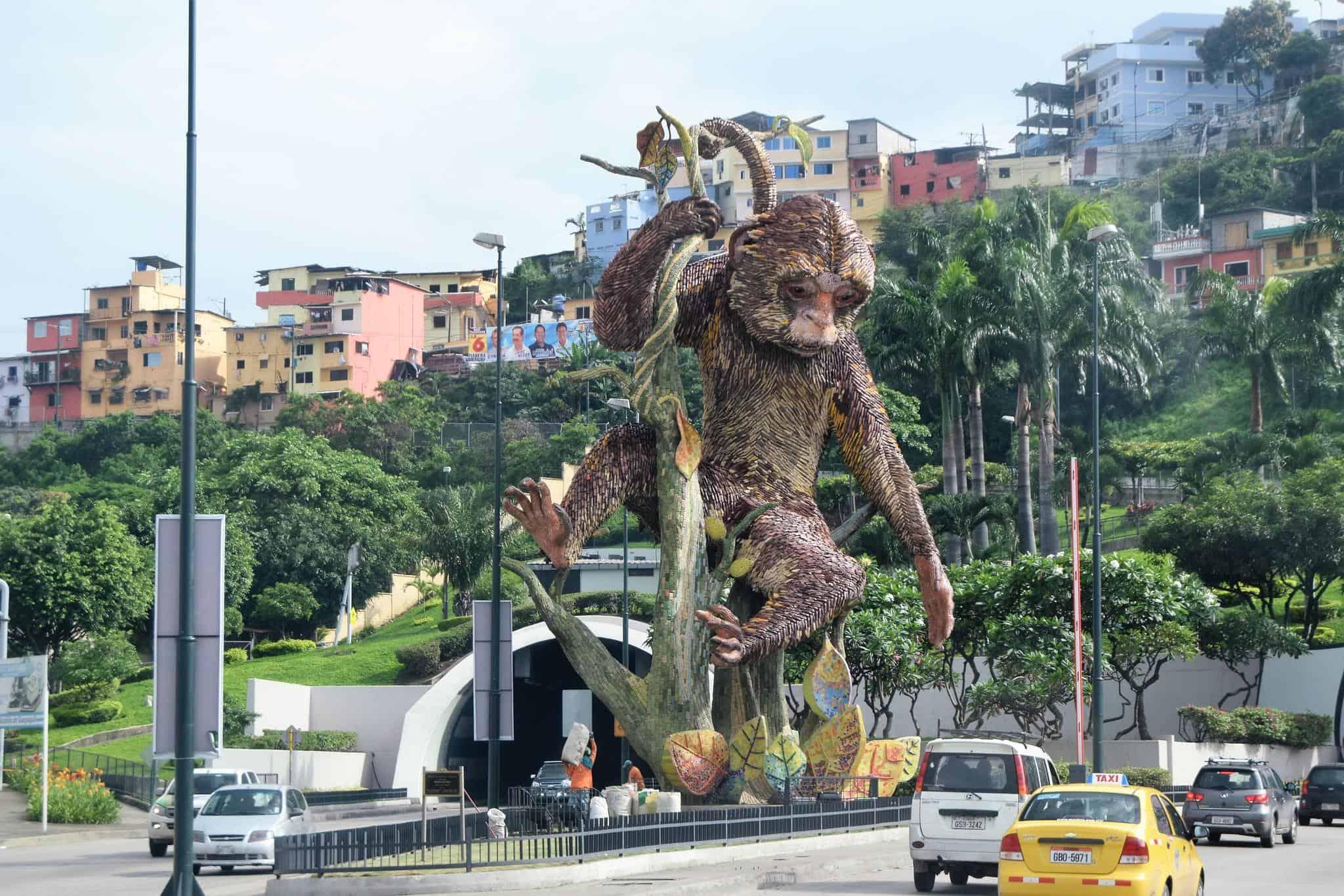 guayaquil ecuador mono machin