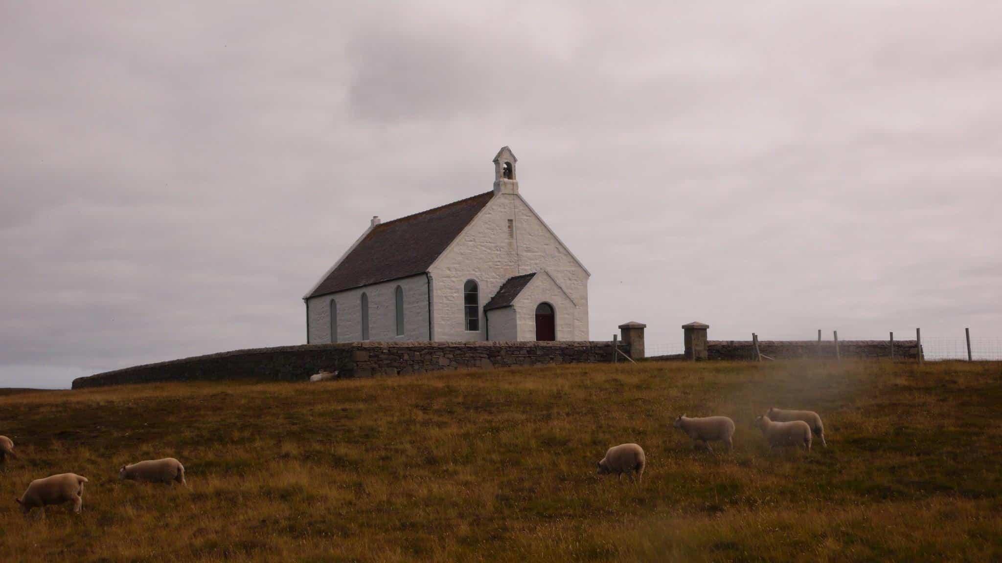 uk scotland fair isle sheep