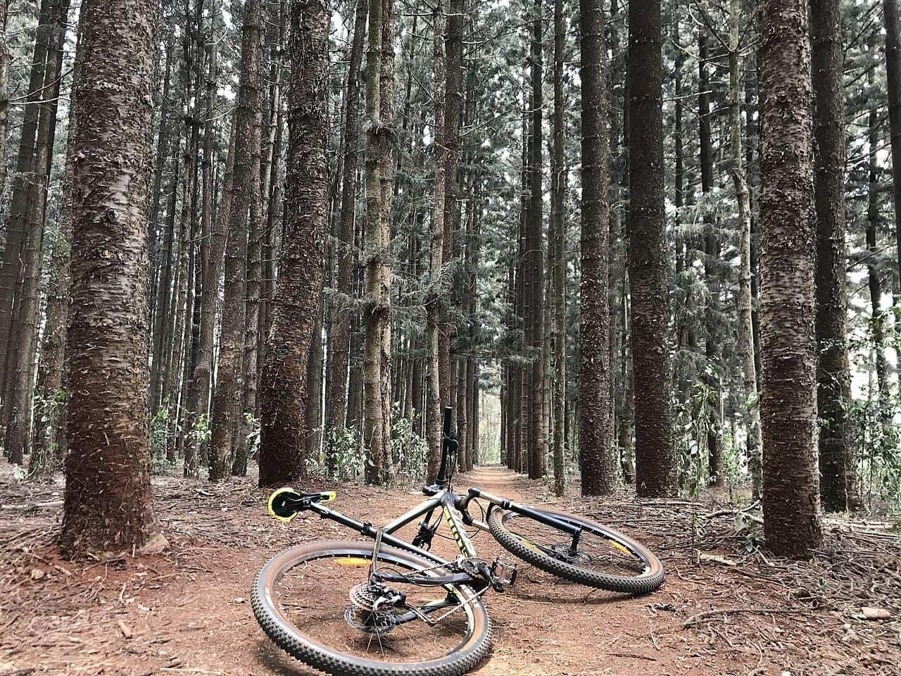 nairobi kenya karura forest bicycle